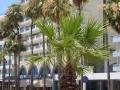 Foinikoudes_Avenue_in_Larnaca_Republic_of_Cyprus.jpg